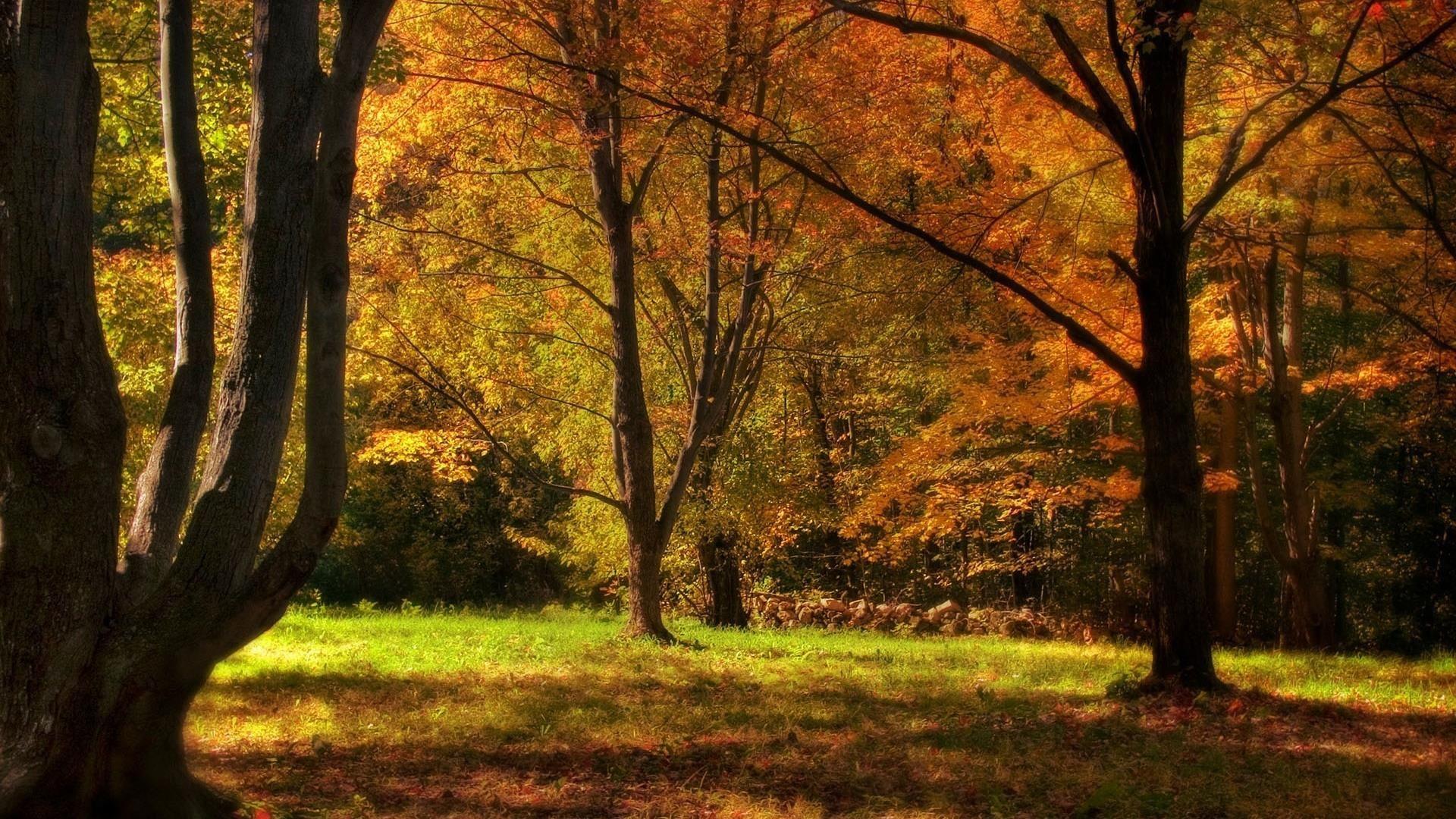 Des Fonds D Ecran En Hd A Telecharger Gratuitement Paysage Forestier Fond Ecran Foret