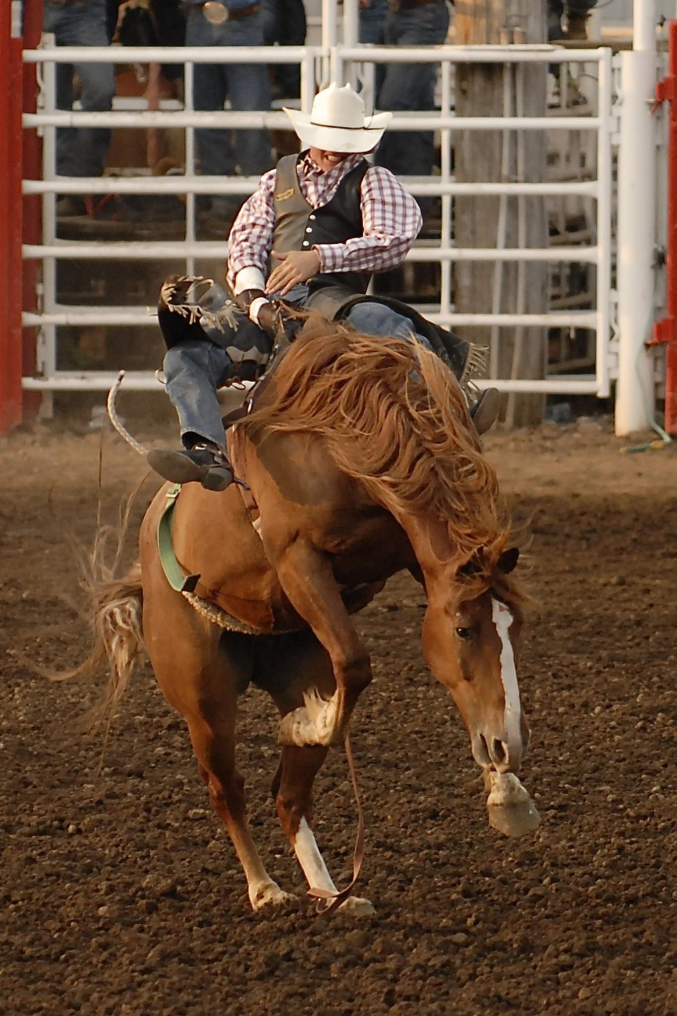 Bronc rider at the St. Paul Rodeo in St. Paul Oregon USA hanging on for the full 8 seconds.