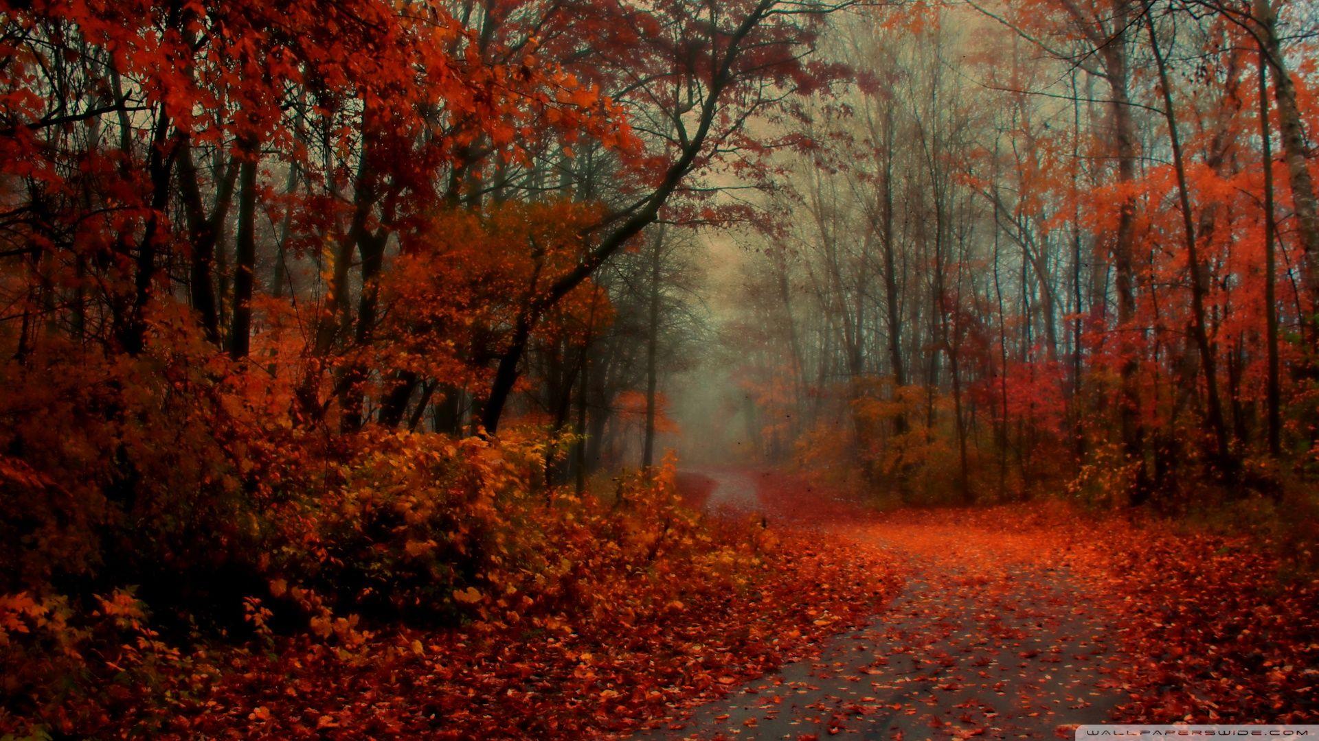 Romantic Autumn Widescreen Wallpaper HD Wallpaper at