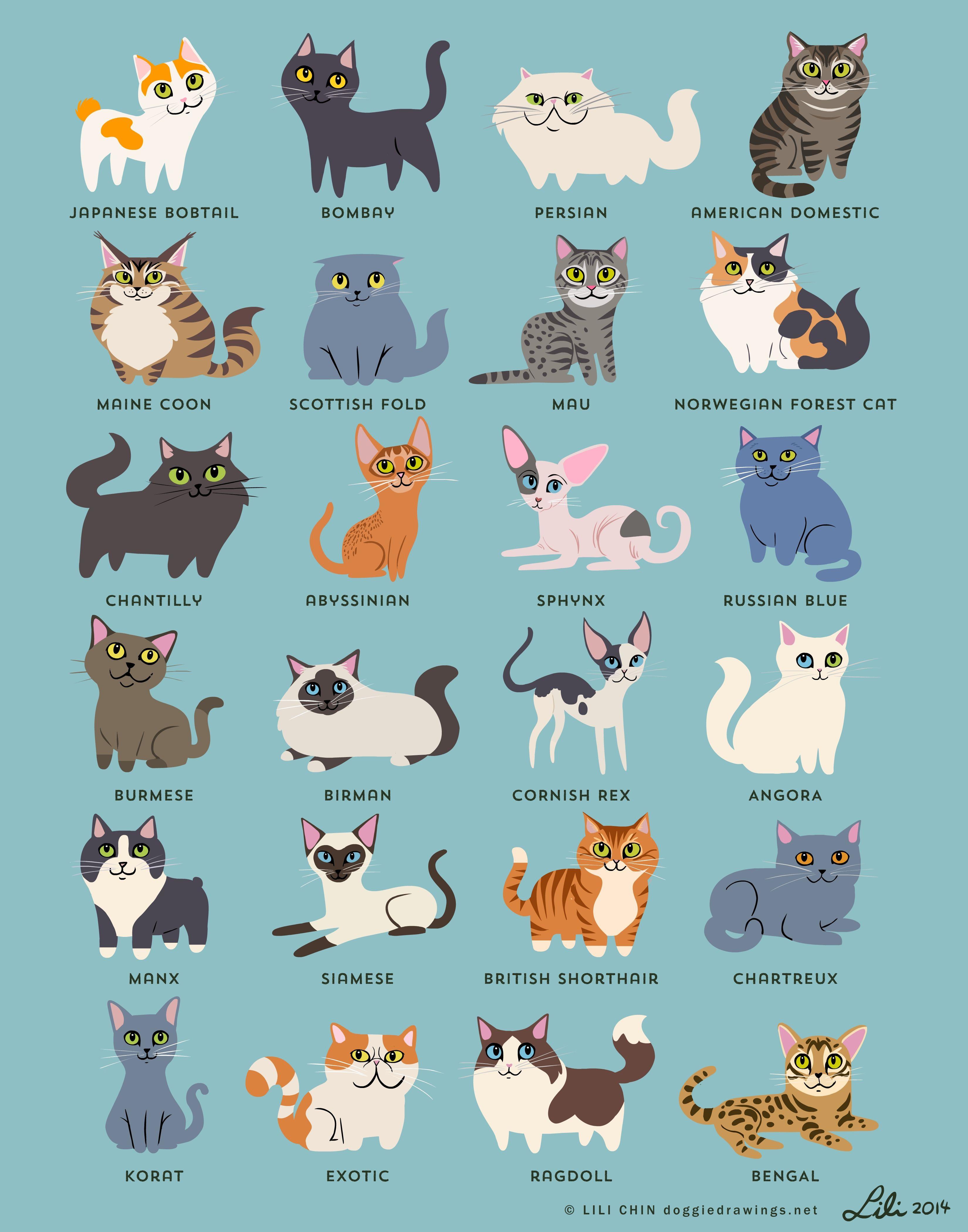10 cute and funny cat prints you'll love Katzen