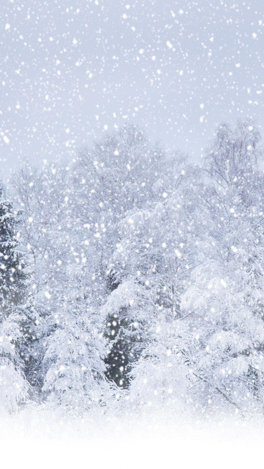 Heavy Snow Forest 4k Android And Iphone Wallpaper Tree