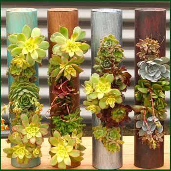 Vertical Garden Succulent Planters From Vertical Garden Solutions! Too Cute
