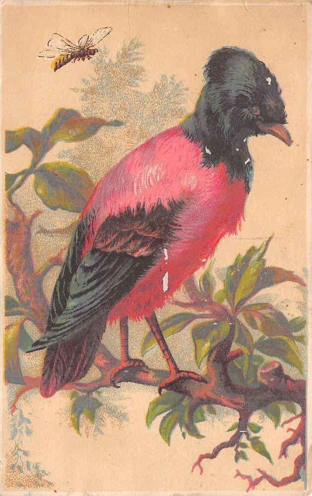 Bird Bee Victorian Trade Card Wilkins Adey Booksellers