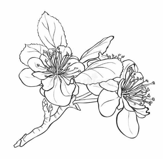 Gambar Bunga Dari Pensil Yang Mudah 39 Gambar Sketsa Bunga Indah Sakura Mawar Melati Matahari Download 8 Lang Menggambar Bunga Bunga Sakura Lukisan Bunga
