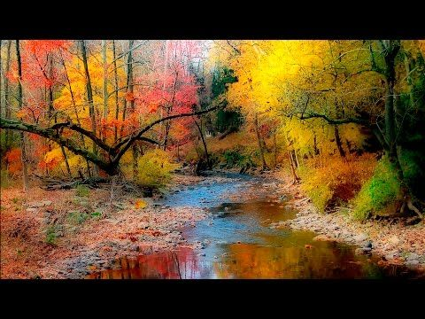 Songs : Yoga Music Rain and Native American Flute 2 - Shamanic Dream  #Yoga Fitness & Diets : Move i...