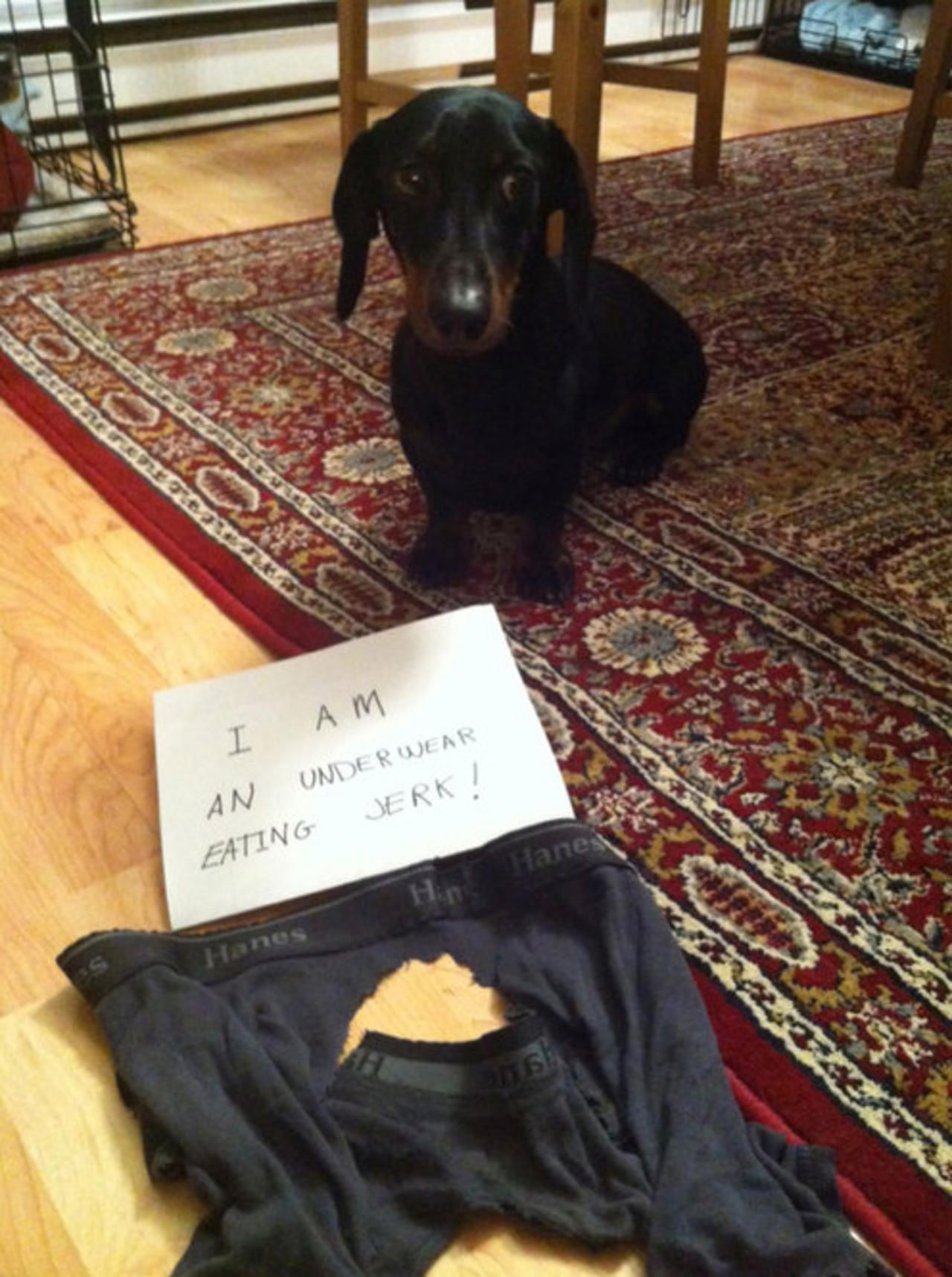 Hilarious dog shaming - Pictures - CBS News