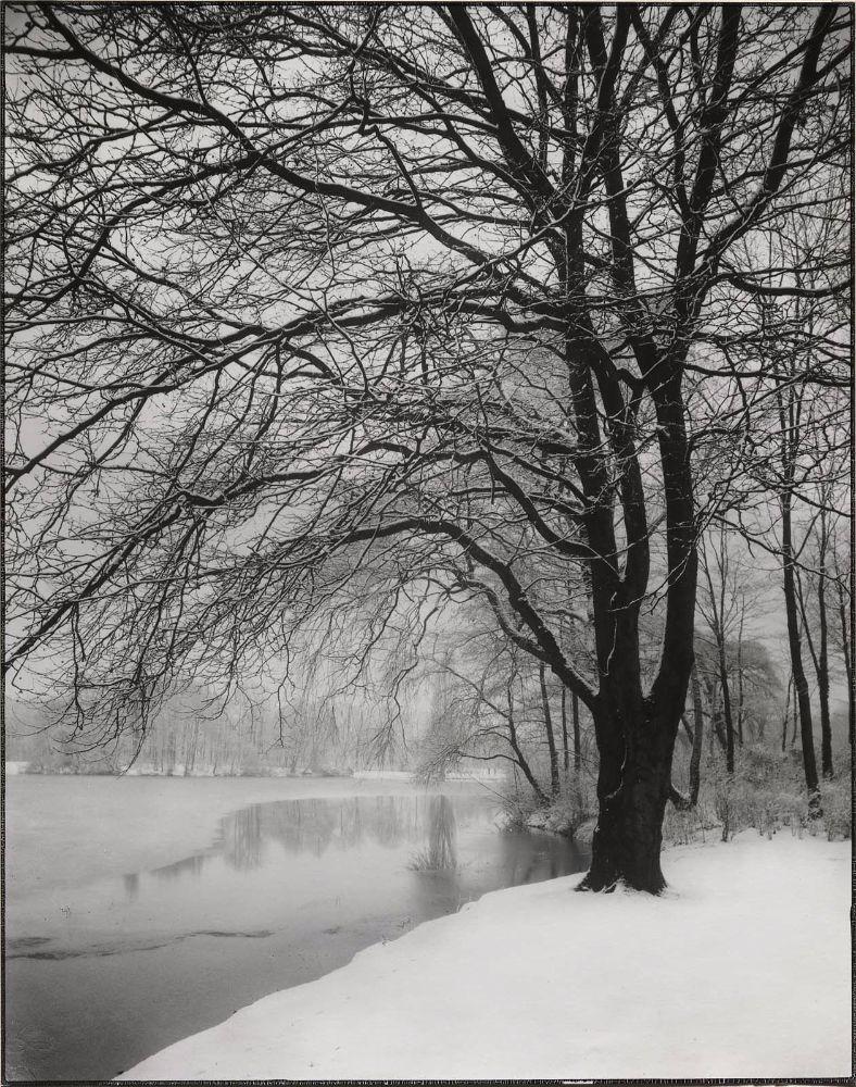 Am Stadtwaldweiher (Pond in the City Park) August Sander