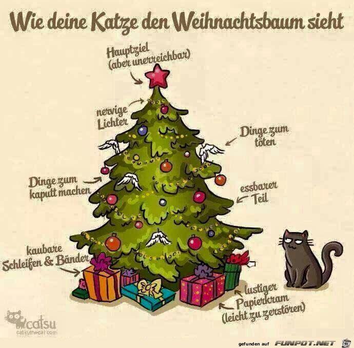 Lustige bilder katzen weihnachten