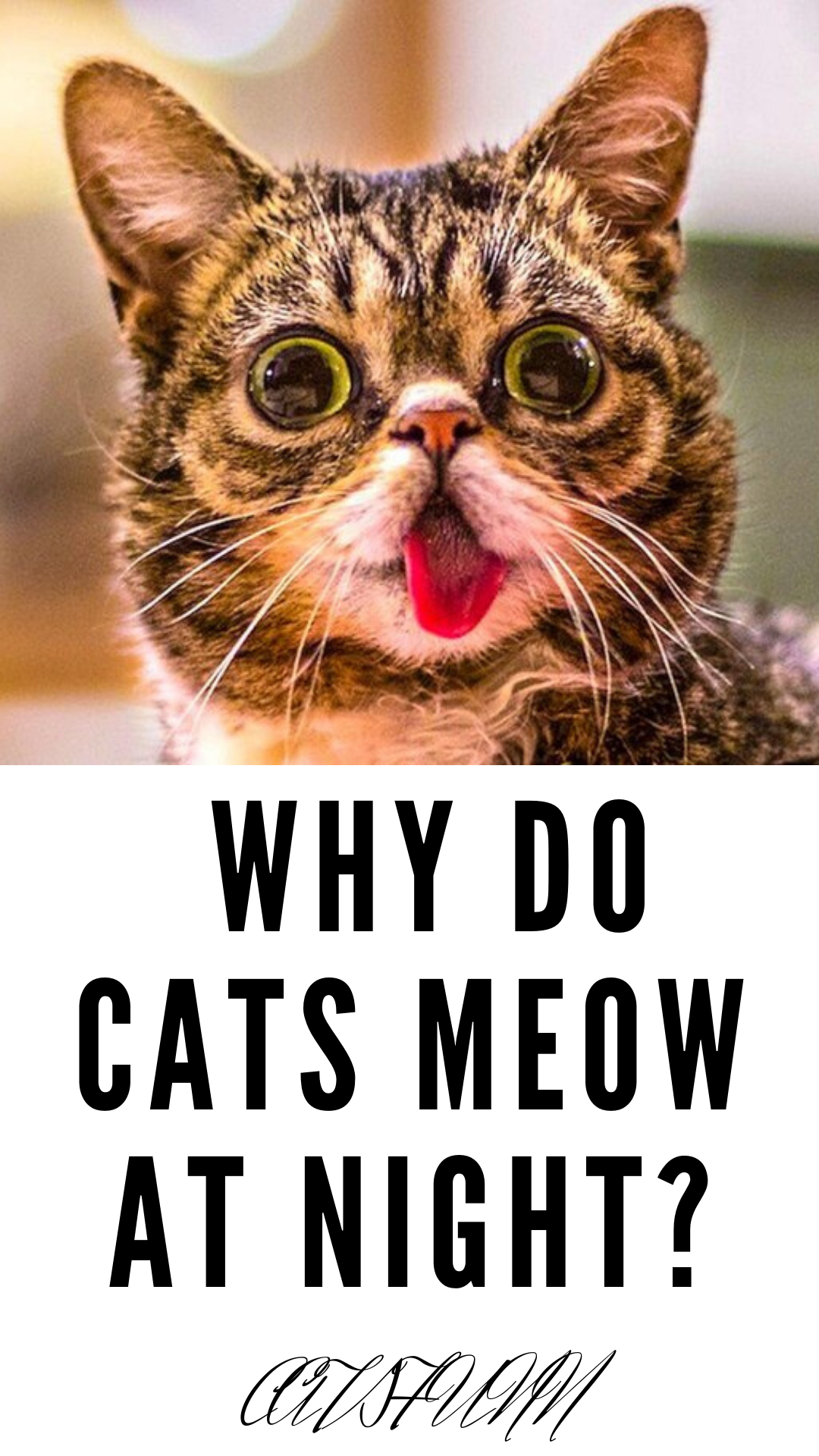 Why Do Cats Meow At Night In 2020 Cat Meowing At Night Cats Pretty Cats