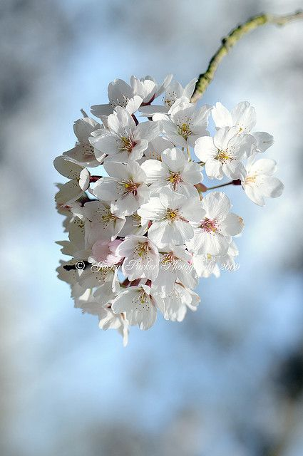 Spring White Flowers Photography White Flowers Beautiful Flowers