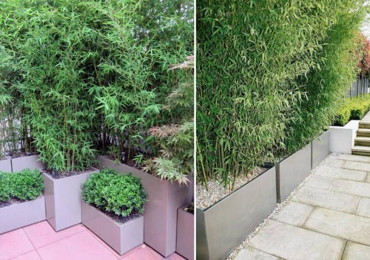 bambou en pot brise vue naturel et d co sur la terrasse brise vue brise et la terrasse. Black Bedroom Furniture Sets. Home Design Ideas