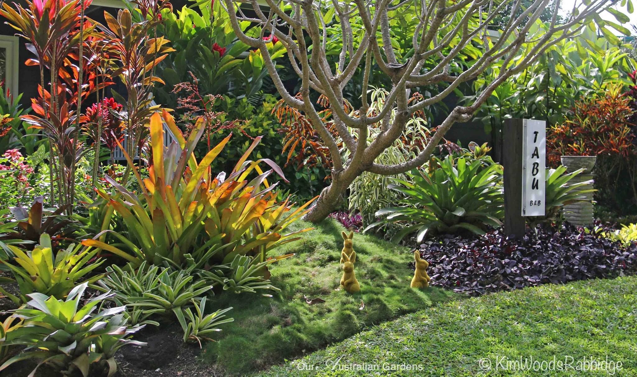 Image result for north queensland garden plants | Tropical ...