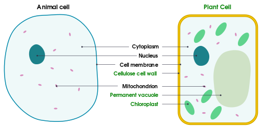 Cell Membrane Definition Function Structure Animal Plant Cell In 2020 Plant Cell Cell Membrane Animal Cell