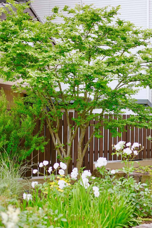 庭木にオススメの樹木と選び方 助成金も賢く利用しよう 庭 木 側