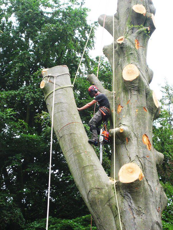 Pin By Ailani Ortiz On Photography Tree Surgeons Tree
