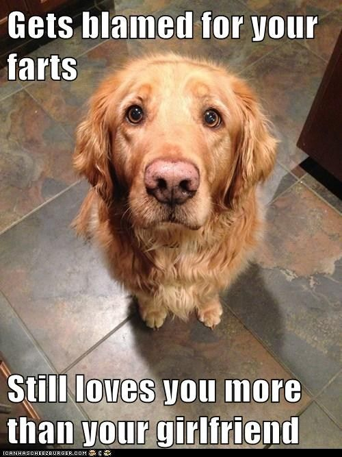 Funny golden retriever pictures with captions