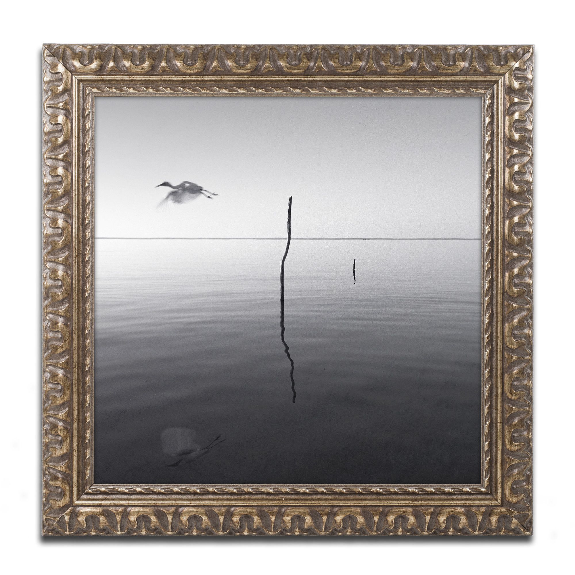 Fly by Moises Levy Framed Photographic Print