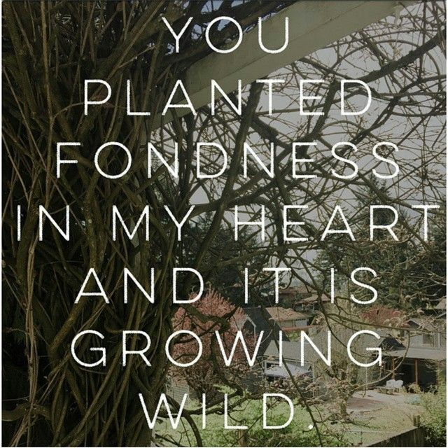 You Planted Fondness In My Heart And It Is Growing Wild Tapiwa