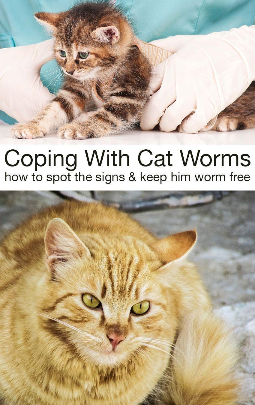 Pin On Cat Needs