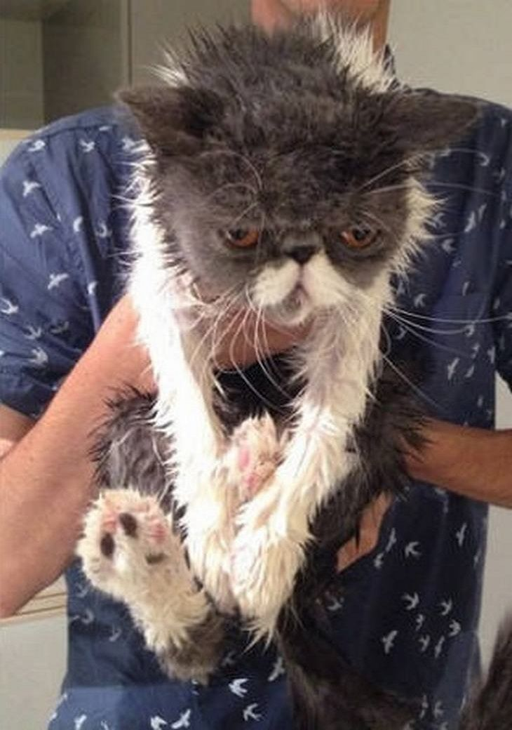 Adorable Before And After Photos Of Pets Getting A Bath Cat Bath Persian Cat Crazy Cats