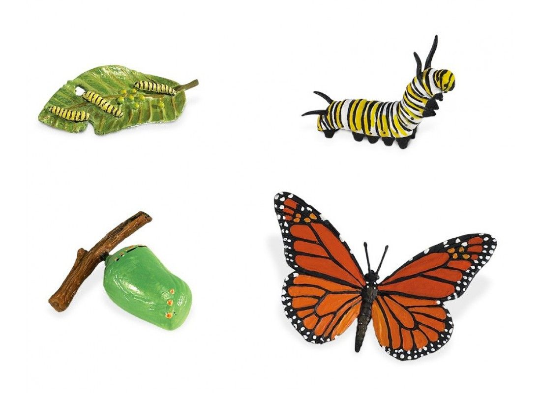 Displaying Butterfly Life Cycle Coloring Page.jpg