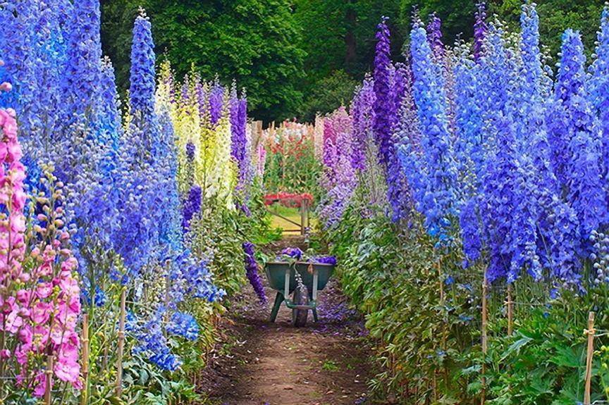 Delphinium Garden English Cottage Garden Cottage Garden