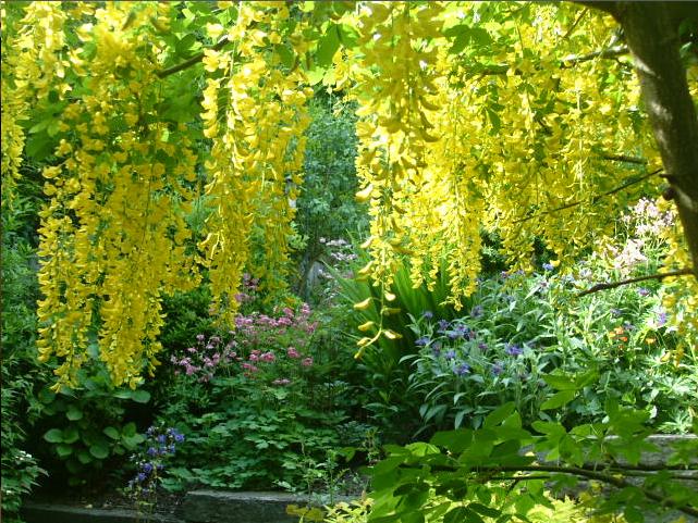 Laburnum Garden