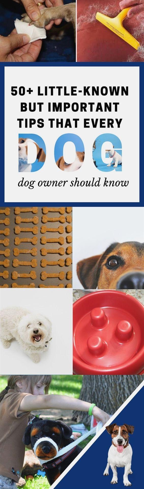 Dog Training Guard Dog Training Quadrants Dog Training Collar