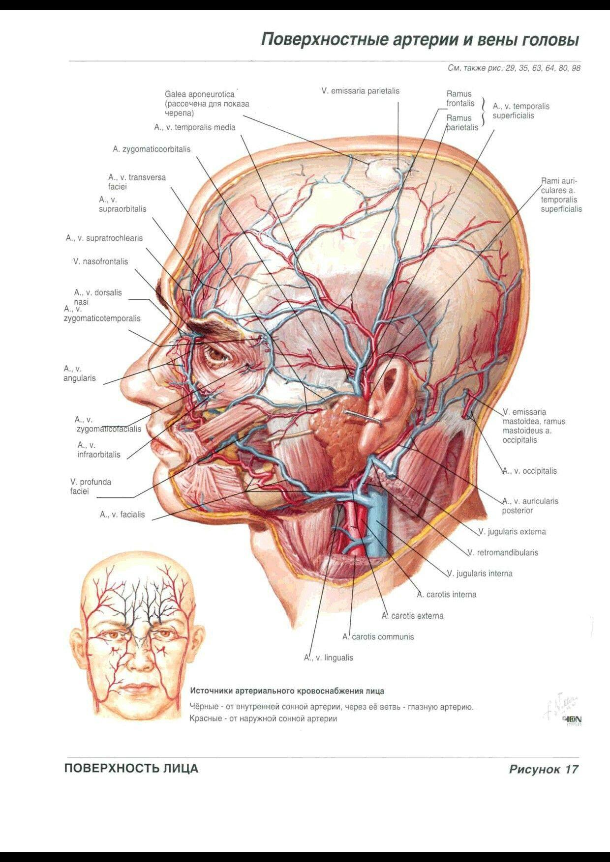 Pin By Alinash On Anatomy In 2018 Pinterest Anatomy Human Body