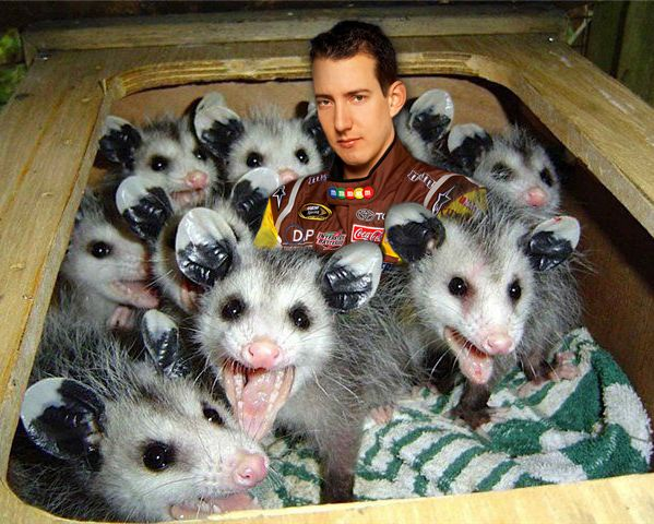 #NASCAR It's desperation time for the frustrated Kyle Busch.