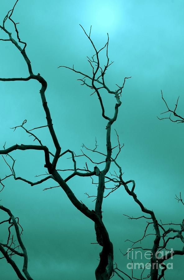 Turquoise Sky Photograph  - Turquoise Sky Fine Art Print