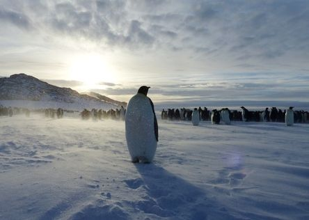 """""""Overwintering in Antarctica, the emperors and the humans live side by side. Curious and unafraid, this female came by to meet us humans, probably wandering whether we also were some kind of weird penguins... The fresh wind drifting snowpowder brought magic to this encounter.""""  Join the #MyNatureMoment movement here: bit.ly/24yVWYL"""