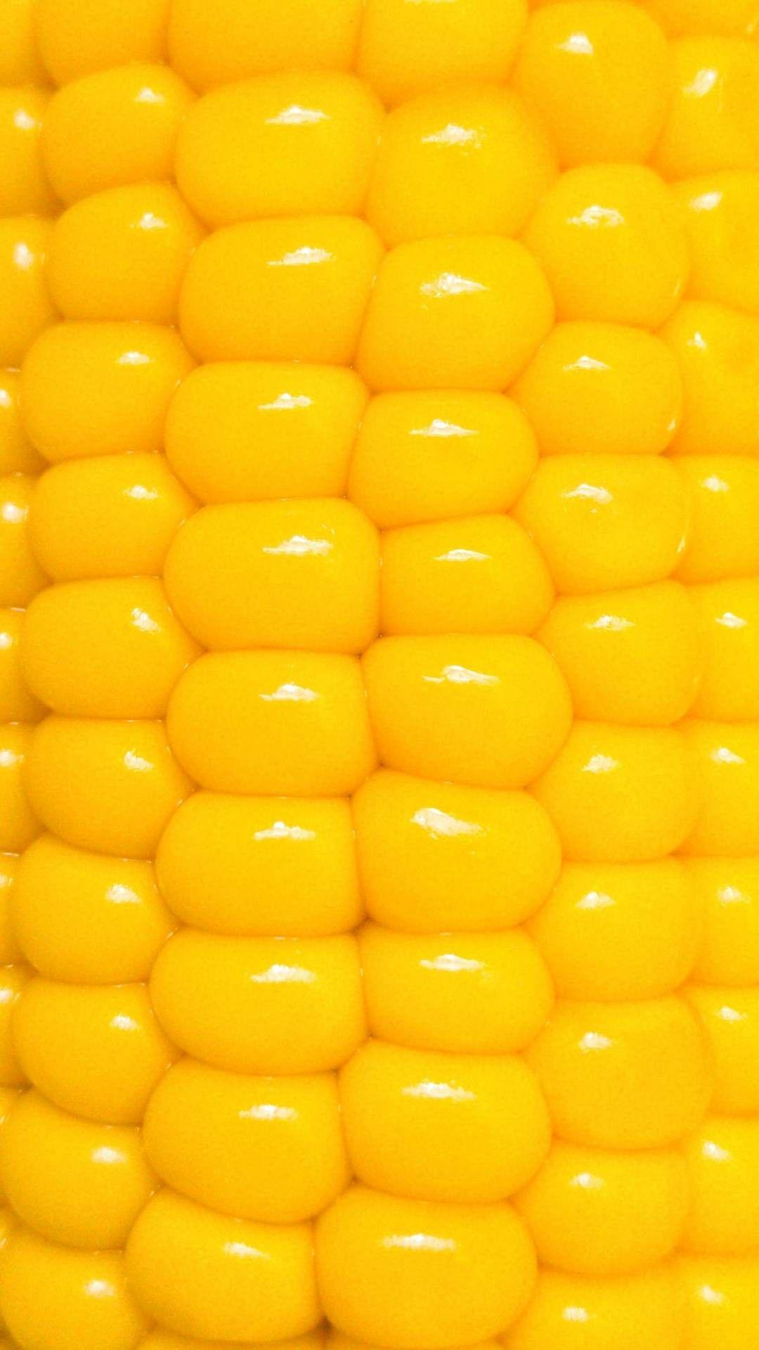 A close up of corn on the cob wallpaper close up corn