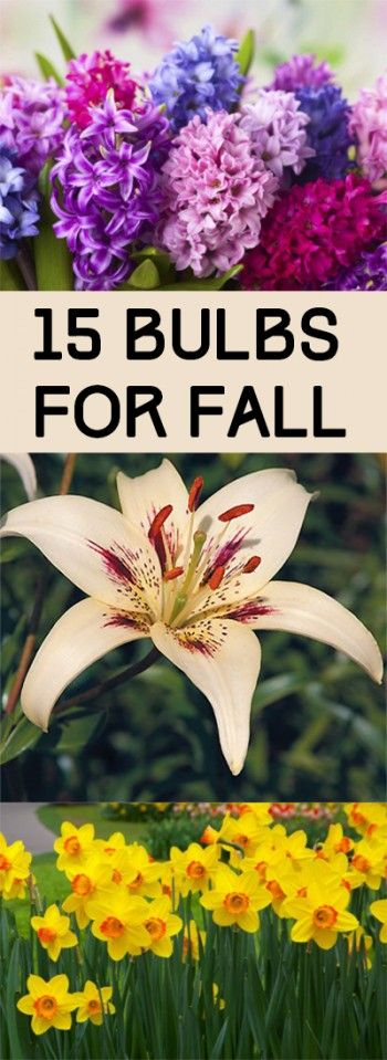 15 Bulbs for Fall