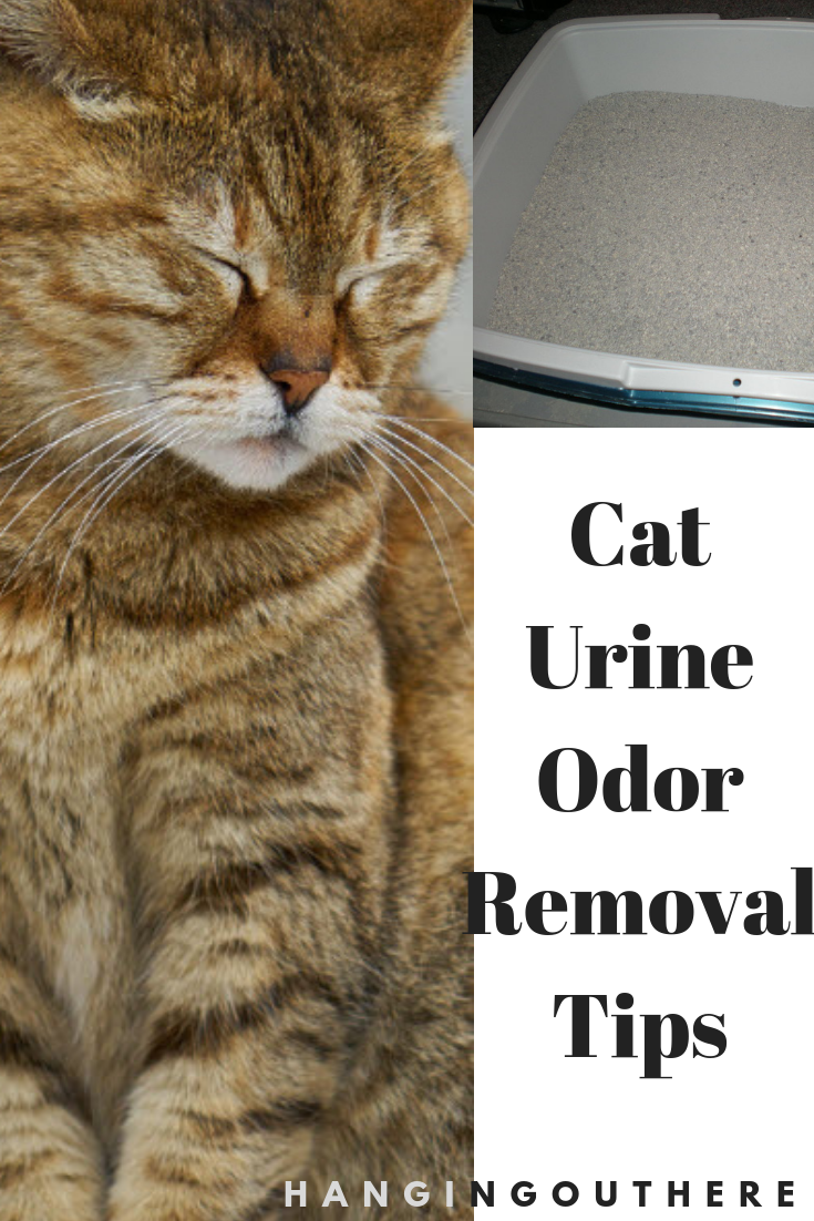 Wordpress Installation Cat Urine Urine Odor Odor Remover