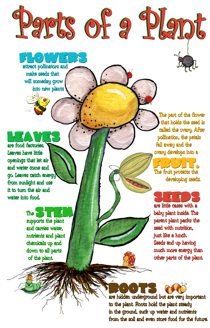 Interactive Parts of the Plant for Plant and Flower