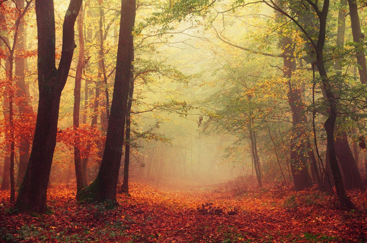 Autumn forest framed photo print - foggy forest - nature photography ...