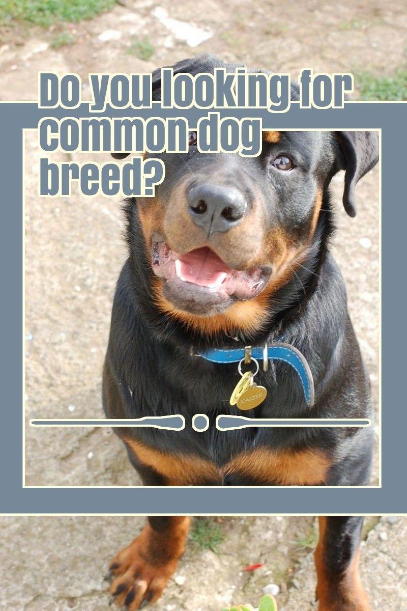 5 Dog Breeds That Are Widely Renowned Around The Globe #whatkindofdog