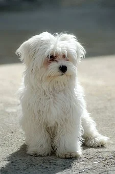 Pin On Cute Puppies