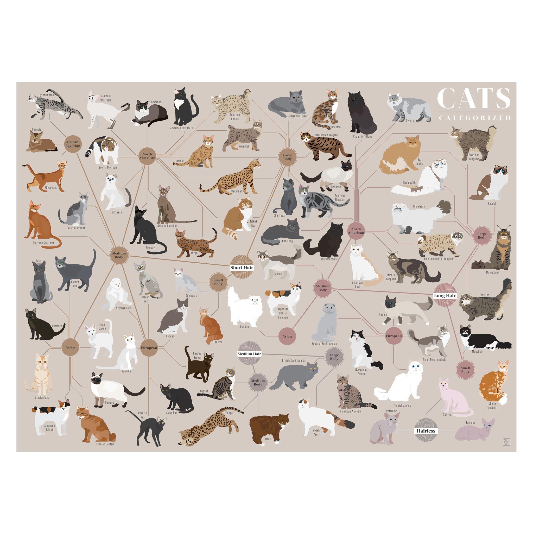 Pin By Amelia Rose On M O D E L D I A G R A M Cat Breeds Chart Cat Breeds Great Cat