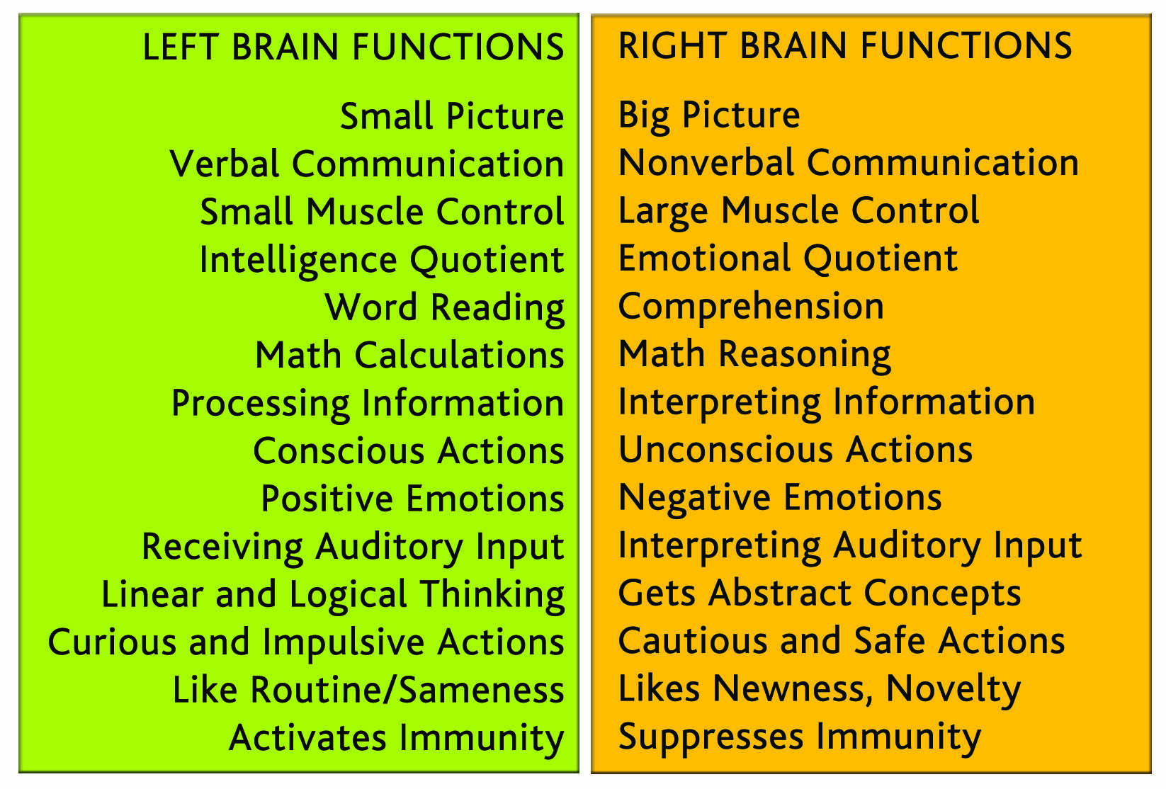 Lobes And Their Functions