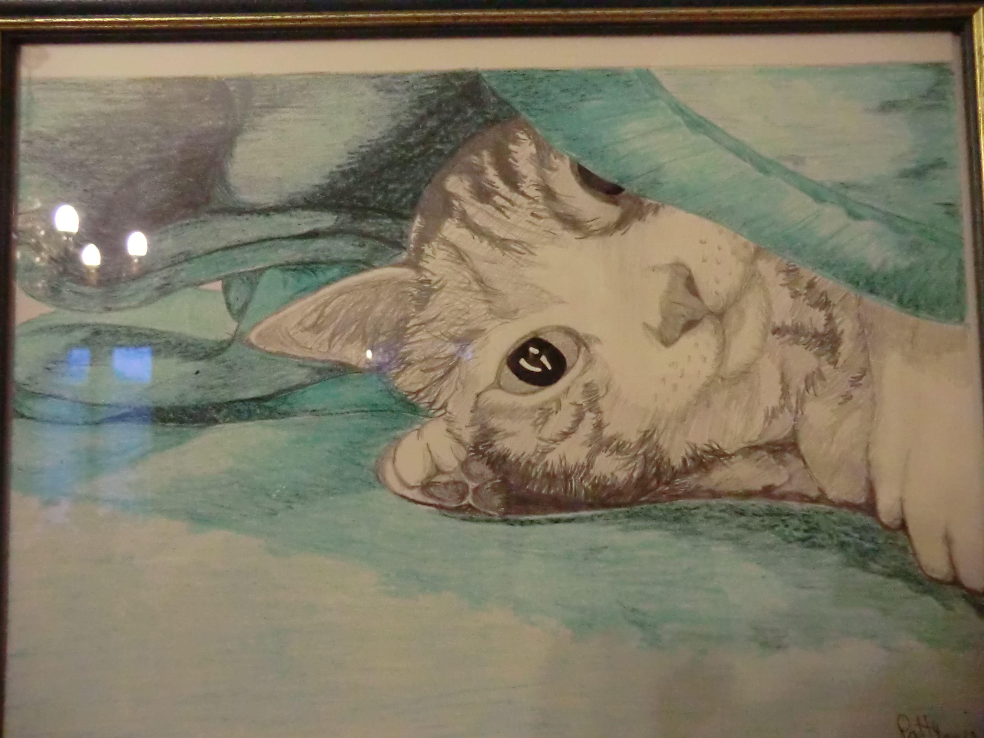 Puma sotto la coperta