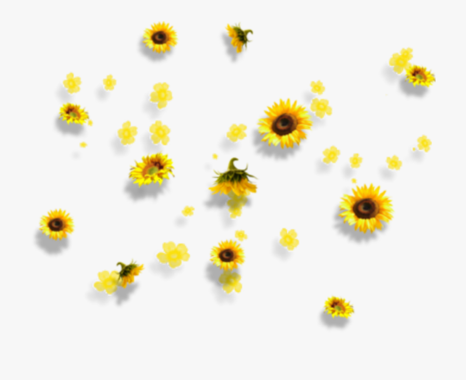 Yellow Aesthetic Flowers Png Yellow Aesthetic Flower Png Images Tumblr Flower