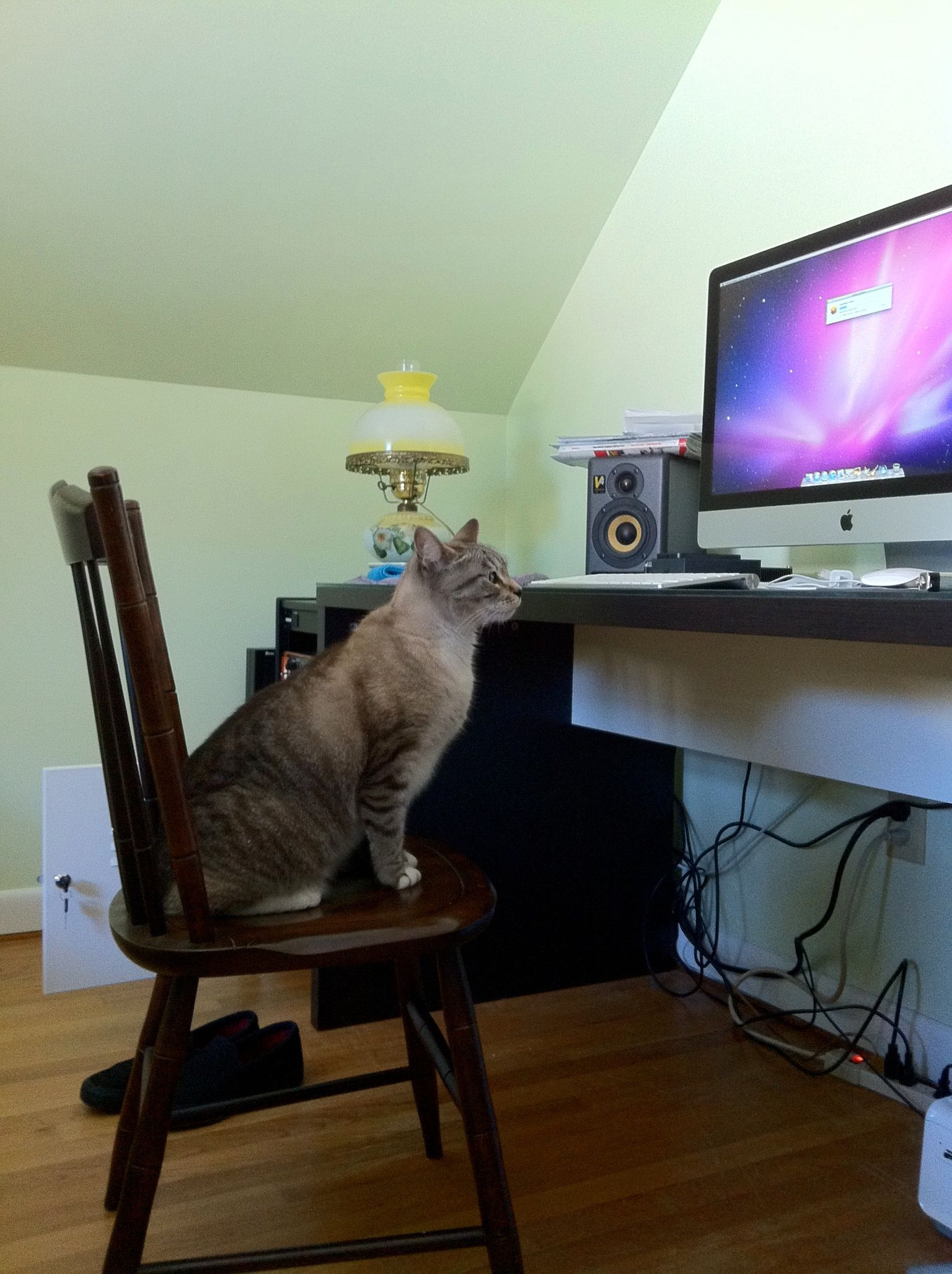 Pearl using her iMac