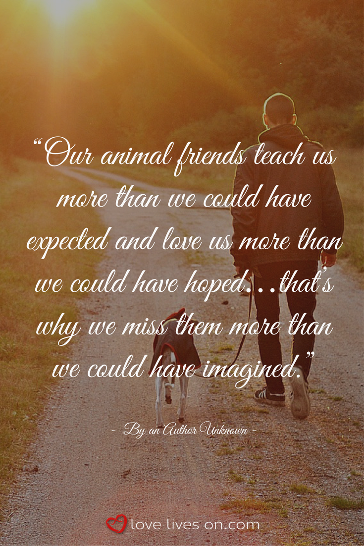 100+ Best Sympathy Quotes | Pet quotes dog, Losing a pet ...