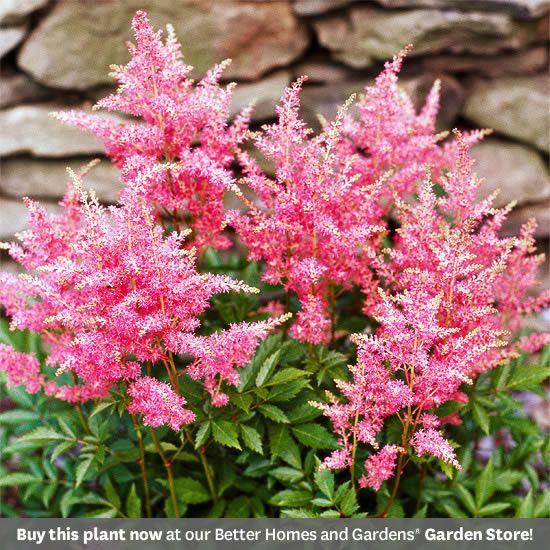 17 Perennials That Will Thrive In Shady Gardens Best Perennials For Shade Flowers Perennials Shade Perennials