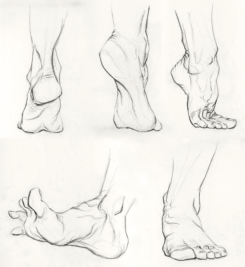 Dessin De Pied Humain organic | drawing | pinterest | anatomie, dessin et pieds