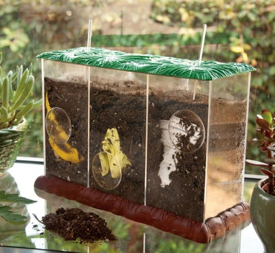 Good Idea Clear Compost Bin That Allows Children To Watch Items Decompose