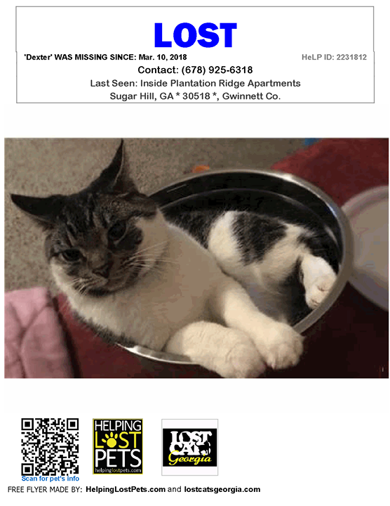 Pin On Lost Cats