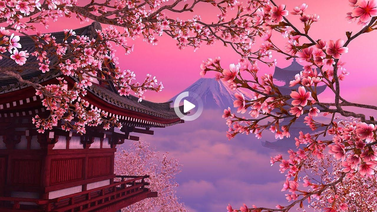 Gunde Iki Bardak Zencefil Suyu Icmek Bel Ve Kalcanizdaki Yaglari Bakin In 2021 Scenery Wallpaper Anime Backgrounds Wallpapers Anime Cherry Blossom